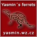 Yasmin's ferrets