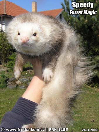 fretka Speedy Ferret Magic