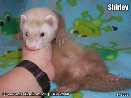 fretka Shirley Ferret Energy
