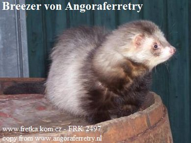 fretka Breezer von Angoraferretry
