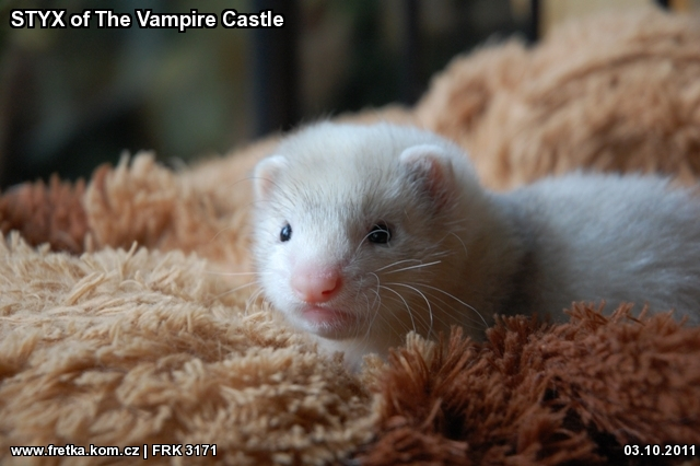 fretka STYX of The Vampire Castle
