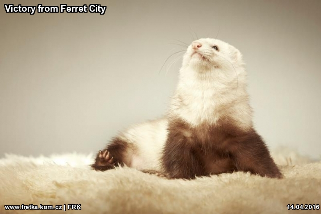 fretka Victory from Ferret City
