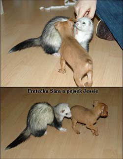 fretka Sára a pes Jessie
