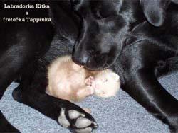 fretka Tappi a pes Kitka